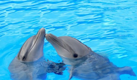How Do Dolphins Communicate 480x280 - О Центре